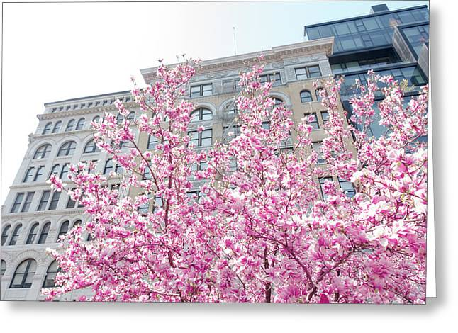 New York In The Springtime Greeting Card by Vivienne Gucwa