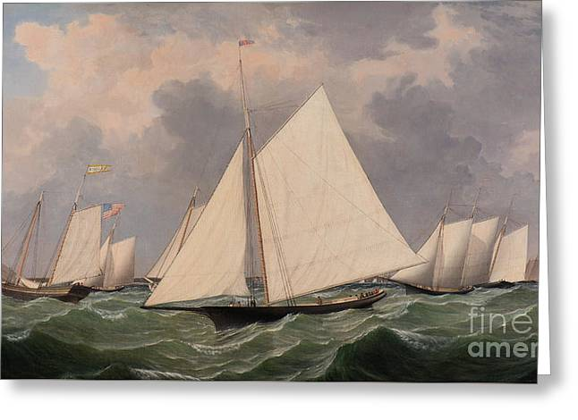 New York Yacht Club Regatta, 1856  Greeting Card