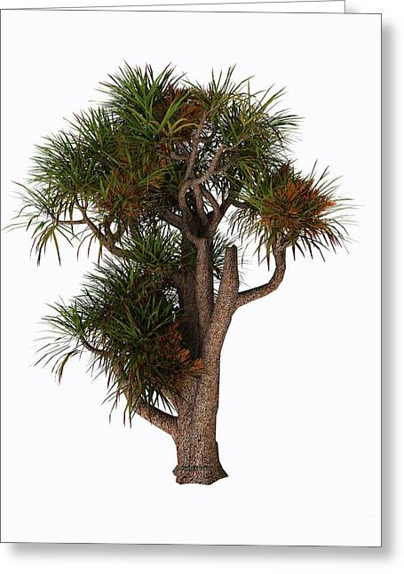 New Zealand Cabbage Tree Greeting Card by Corey Ford