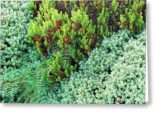 Greeting Card featuring the photograph New Zealand Flora by Michele Penner