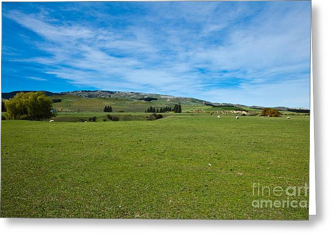 New Zealand Green Rolling Hills Greeting Card by John Buxton