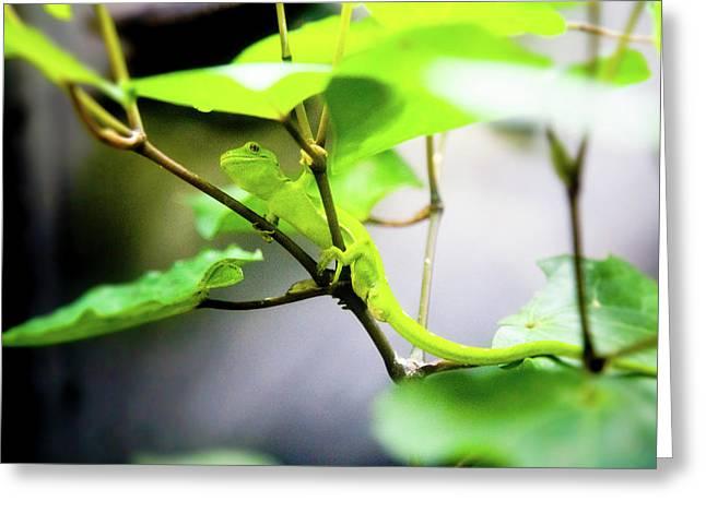 New Zealand Lizard Greeting Card by Kathryn McBride