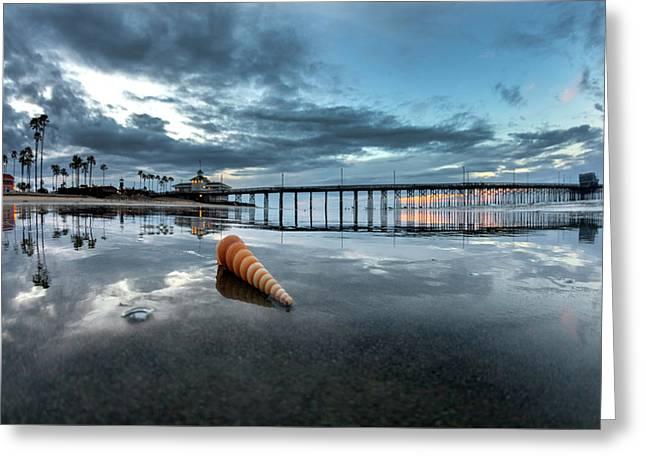 Newport Pier Seashell Greeting Card by Sean Davey