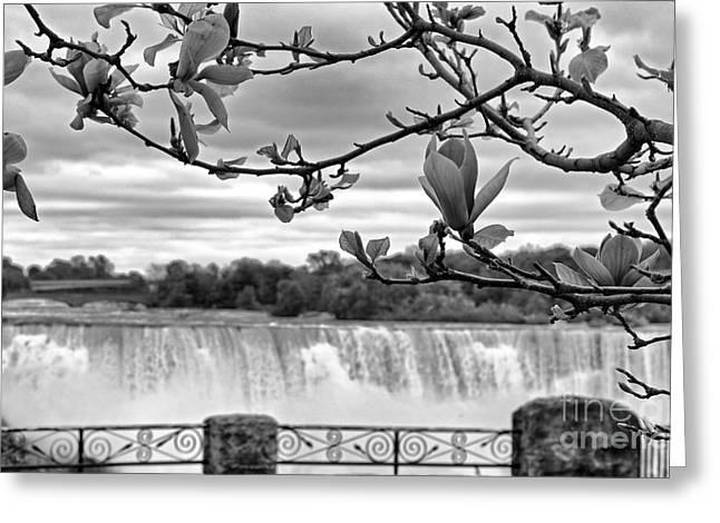Niagara American Falls Spring Greeting Card by Charline Xia