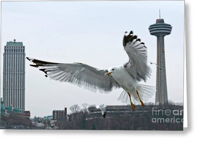 Greeting Card featuring the photograph Niagara Falls With Gulls by Charline Xia