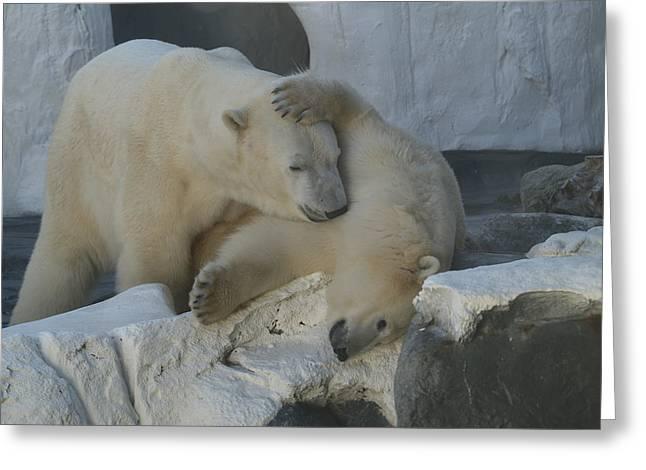 Nice Bear Greeting Card
