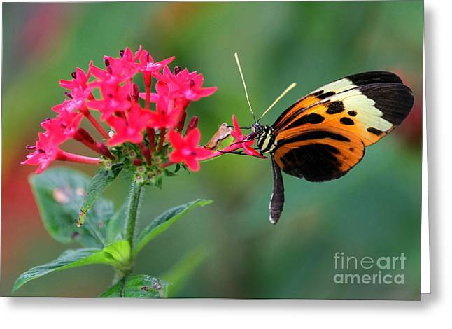 Nice Numata Butterfly Greeting Card