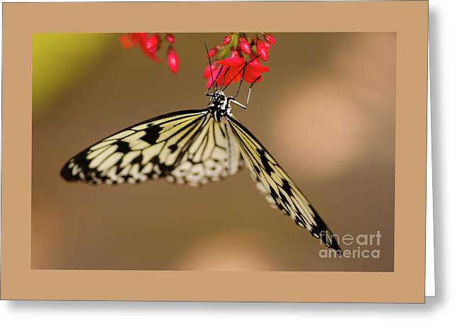 Nick's Butterfly Macro Greeting Card by Nick Boren