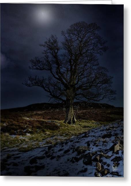 Nidderdale Tree Greeting Card