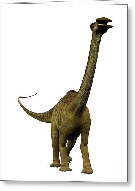 Nigersaurus On White Greeting Card