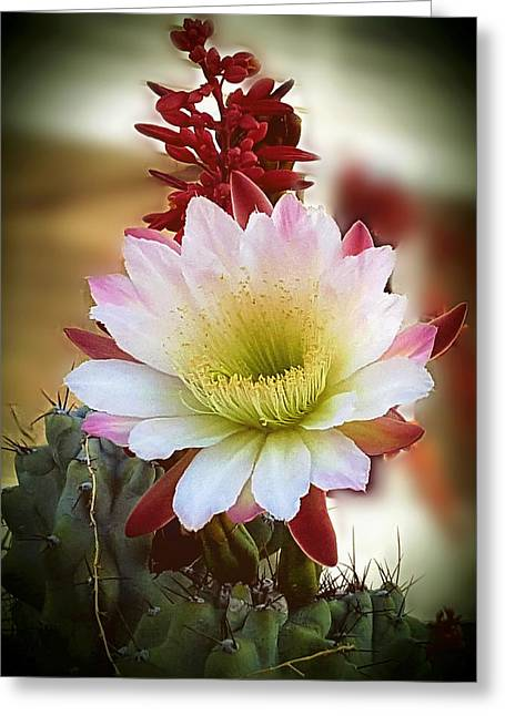 Greeting Card featuring the photograph Night-blooming Cereus 2 by Marilyn Smith