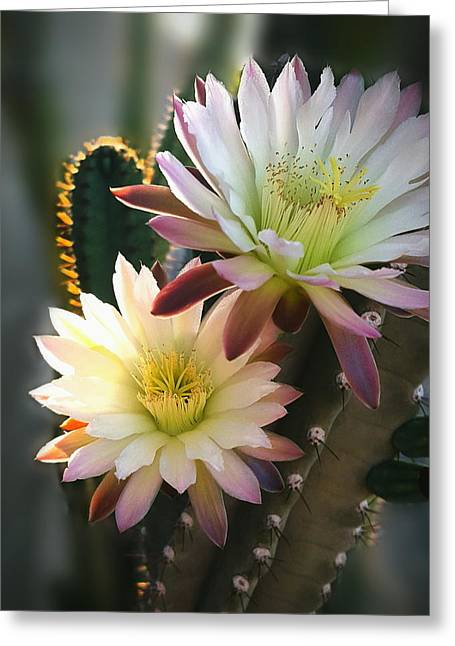 Greeting Card featuring the photograph Night-blooming Cereus 3 by Marilyn Smith