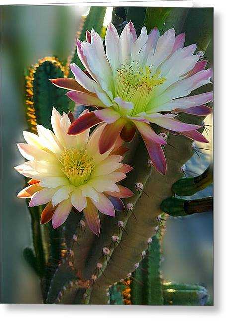 Greeting Card featuring the photograph Night-blooming Cereus 4 by Marilyn Smith