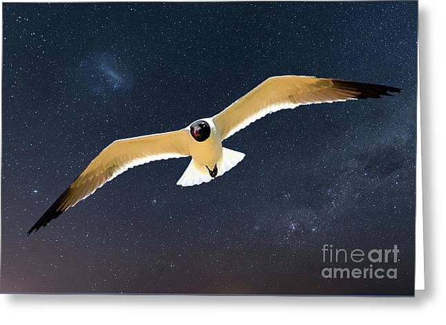 Night Flyer Greeting Card