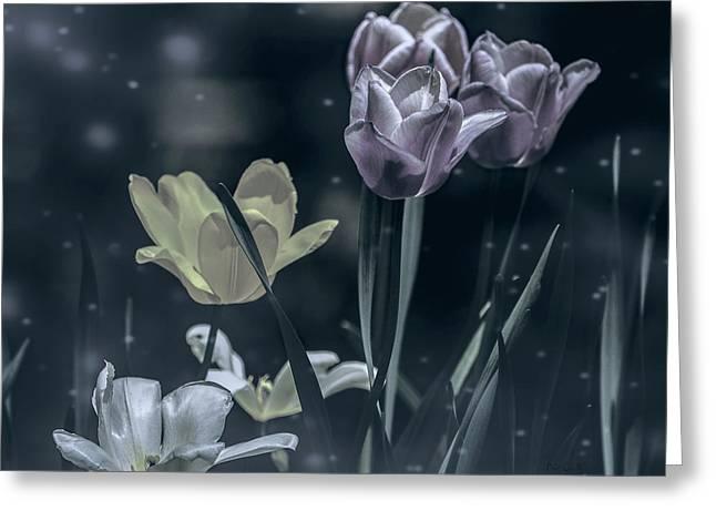 Night Garden Tulips  Greeting Card