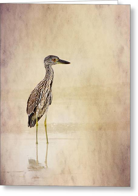 Night Heron 3 By Darrell Hutto Greeting Card by J Darrell Hutto