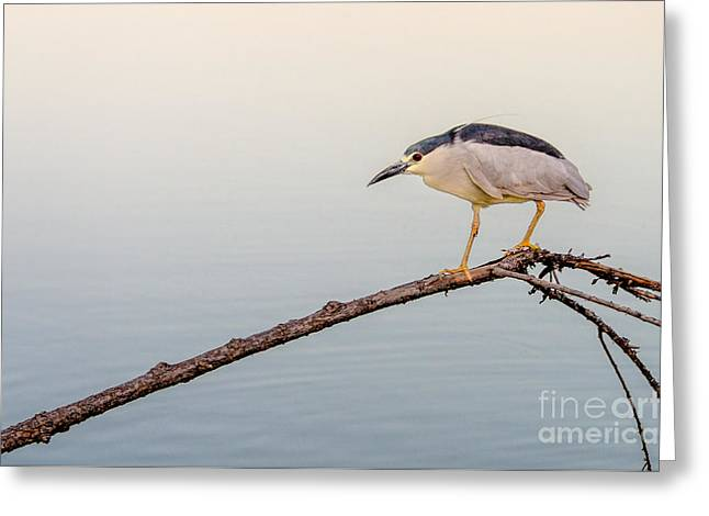 Night Heron Greeting Card by Emily Bristor
