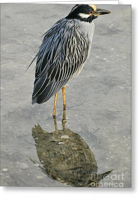 Night Heron Reflection Greeting Card by Rose  Hill
