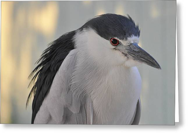 Night Heron  Greeting Card by Rose  Hill