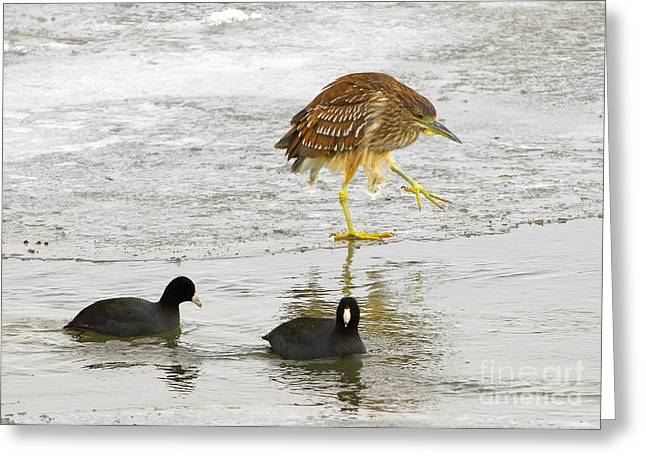 Night Heron With Coots Greeting Card by Dennis Hammer