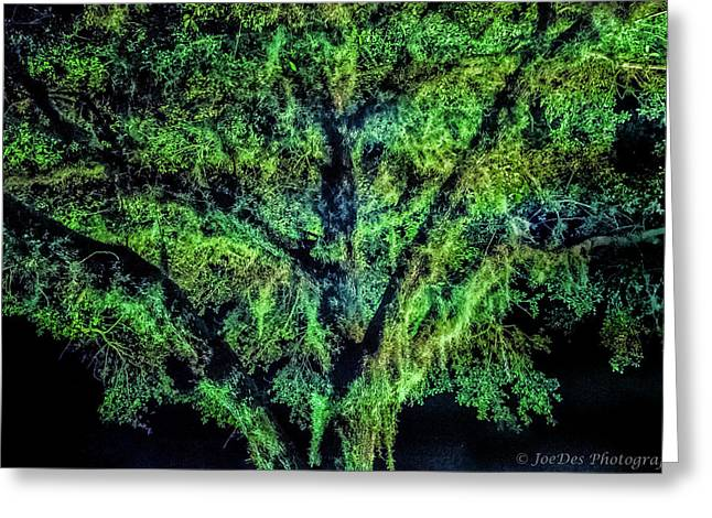 Night Moss Greeting Card