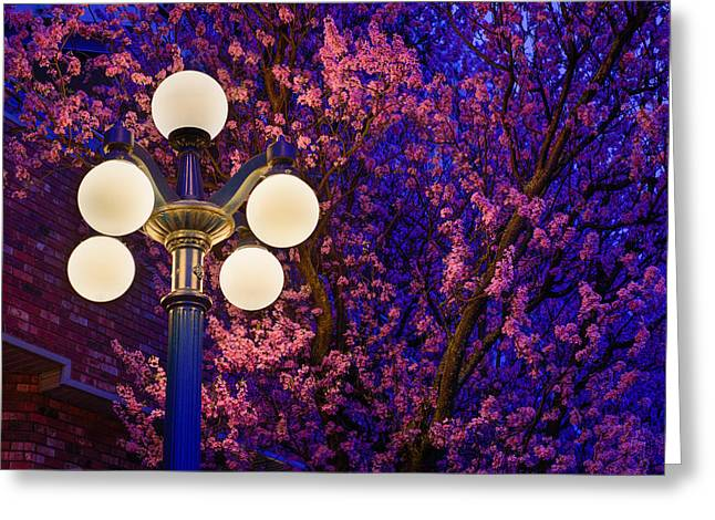 Night Of The Cherry Blossoms Greeting Card