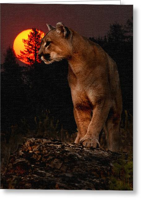 Night Of The Cougar Greeting Card