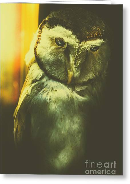 Night Owl Greeting Card by Jorgo Photography - Wall Art Gallery