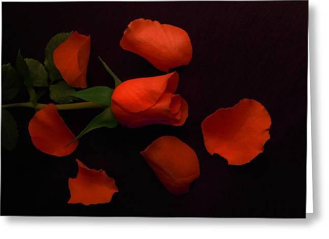 Night Rose 2 Greeting Card