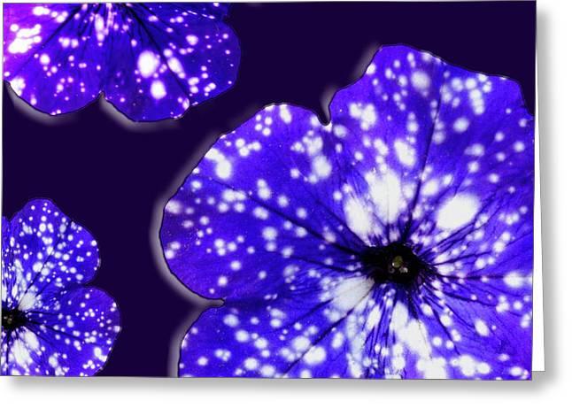 Night Sky Petunias Greeting Card by Tara Hutton