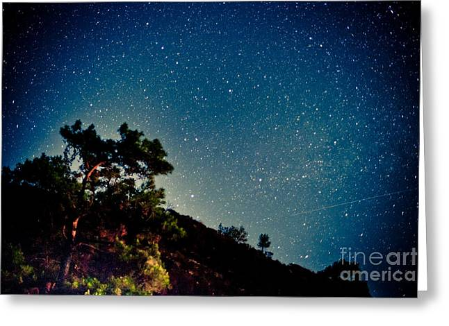 Night Sky Scene With Pine And Stars Greeting Card