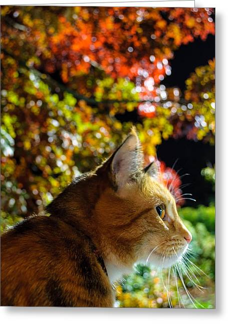 Greeting Card featuring the photograph Night Stalker by Tikvah's Hope