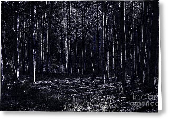 Night Thicket  Greeting Card
