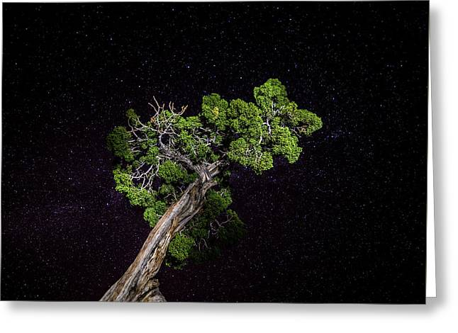 Night Tree Greeting Card