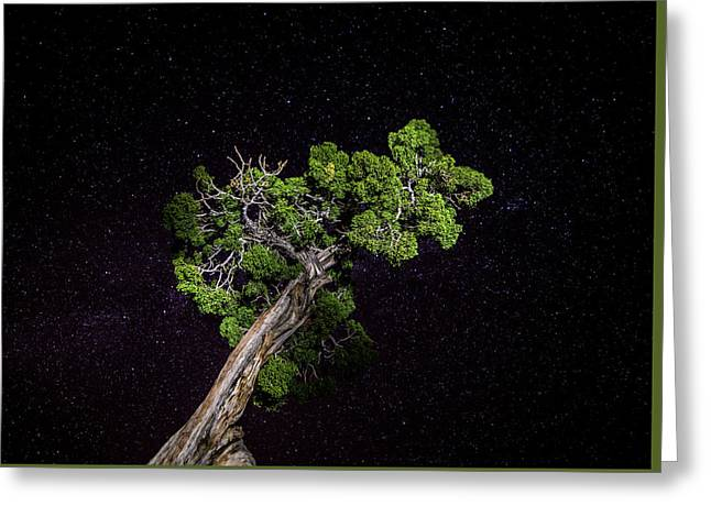 Greeting Card featuring the photograph Night Tree by T Brian Jones