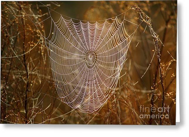 Night Weaver Greeting Card by Carol Groenen