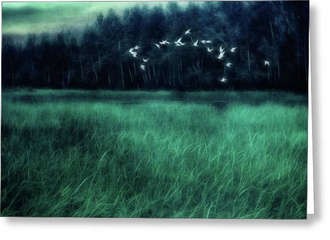 Nightbirds Greeting Card by Priska Wettstein