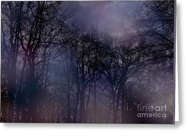 Greeting Card featuring the photograph Nightfall In The Woods by Sandy Moulder