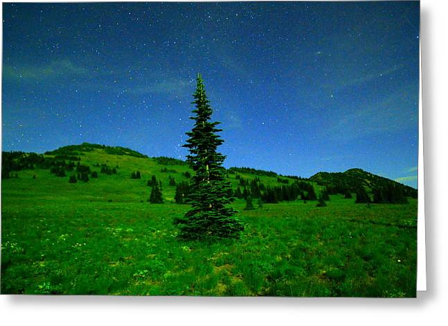 Nightly Stars And A Small Hemlock  Greeting Card by Jeff Swan