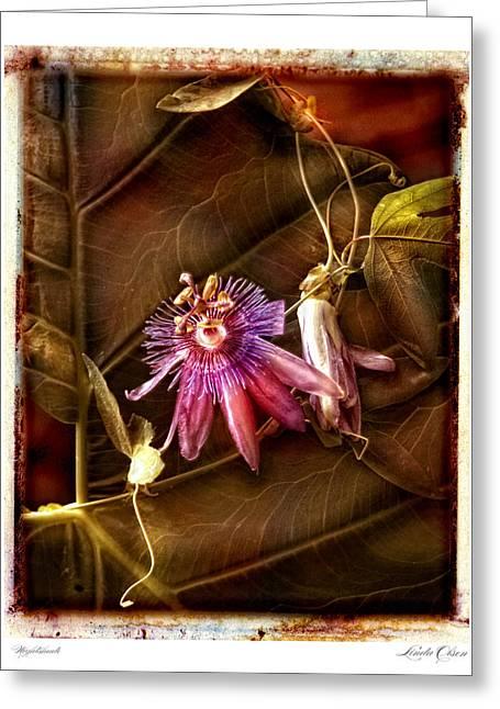 Greeting Card featuring the photograph Nightshade by Linda Olsen