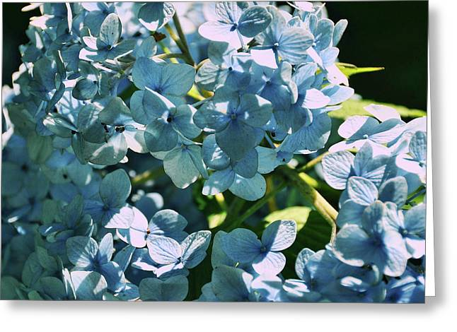 Nikko Blues Greeting Card by JAMART Photography