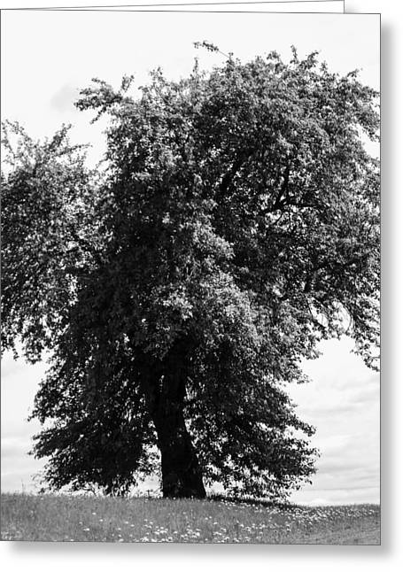 Nina Tree Dressed Out Bw Greeting Card