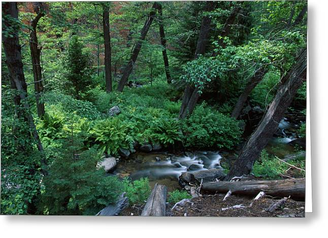Nine Mile Creek - Golden Trout Wilderness Greeting Card