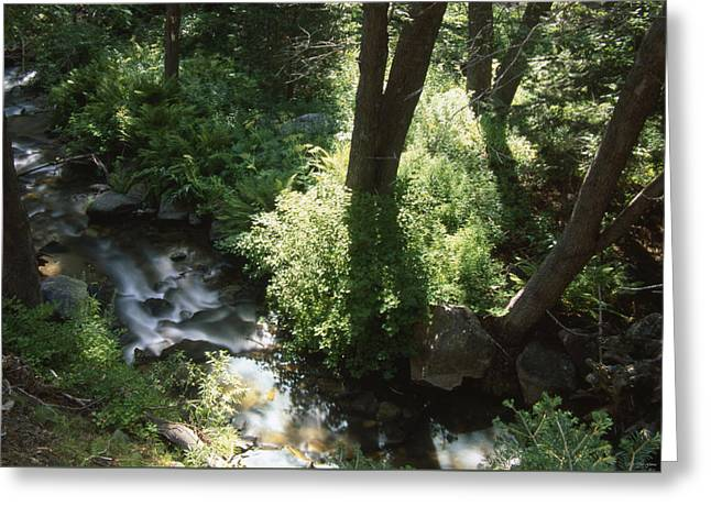 Ninemile Creek Greeting Card by Soli Deo Gloria Wilderness And Wildlife Photography
