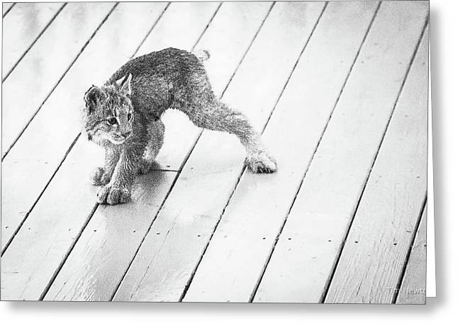 Ninja Lynx Kitty Bw Greeting Card