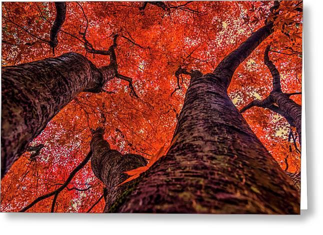 Nishinomiya Japanese Garden - Autumn Trees 2 Greeting Card by Mark Kiver