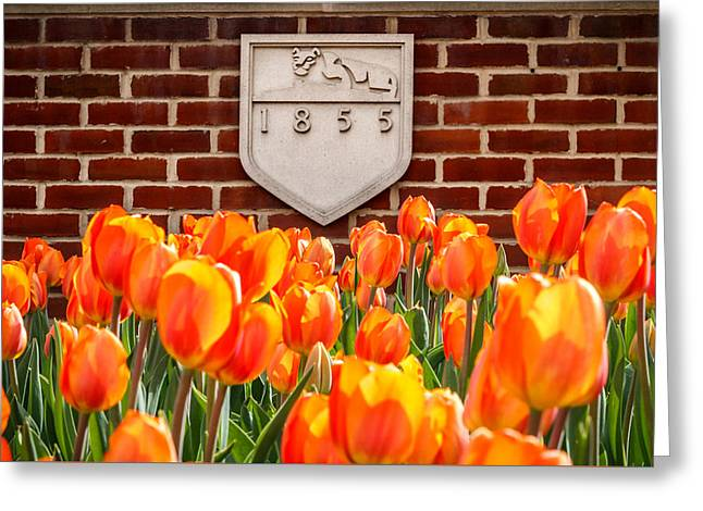 Nittany Tulips Greeting Card by Phillip Schafer