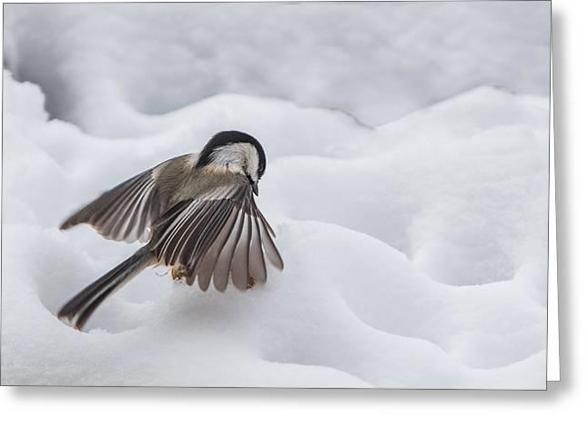 Chickadee - Wings At Work Greeting Card