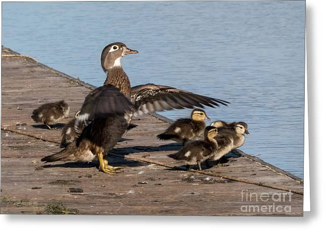 No We're Not There Yet Greeting Card by As the Dinosaur Flies Photography