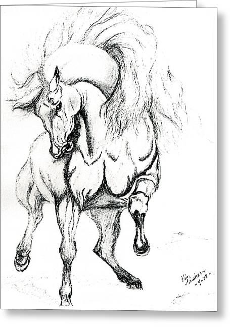 Noble Stallion Greeting Card by Kim Souza